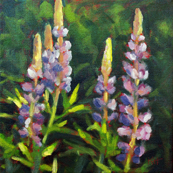 Lupines-KristHasson