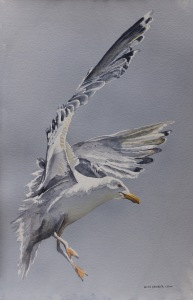 ©Coming in for a Landing by Helen Shideler